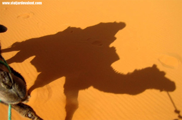 L'ombra d'un dromedari al desert del Sàhara, al Marroc
