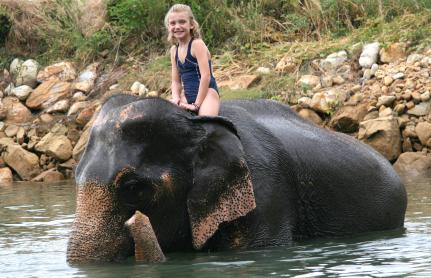 Camp d'Elefants de Maesa a Chiang Mai, Tailàndia.