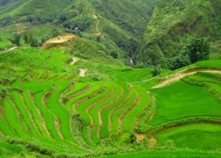 terrazas-y-arrozales-sapa-vientam