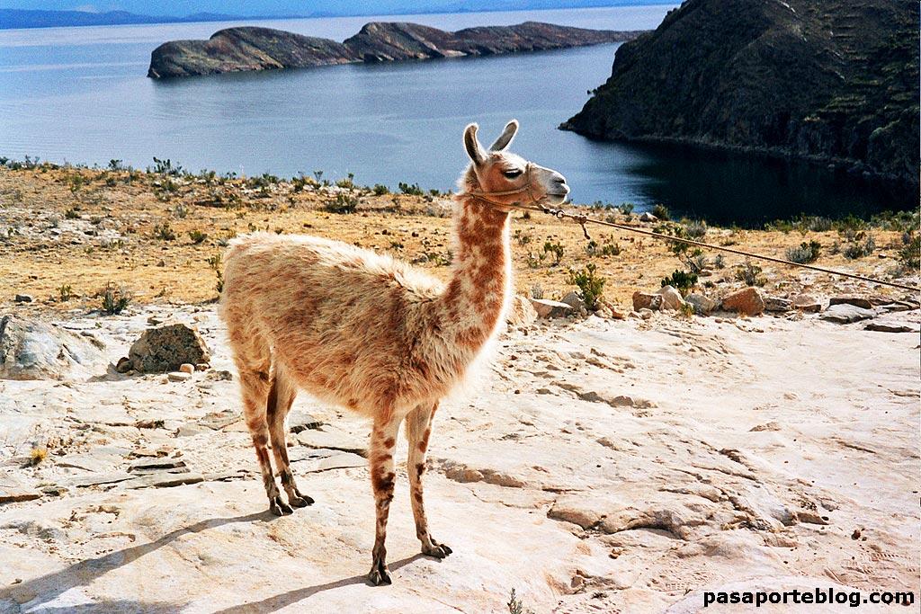 Illa del Sol, llac Titicaca