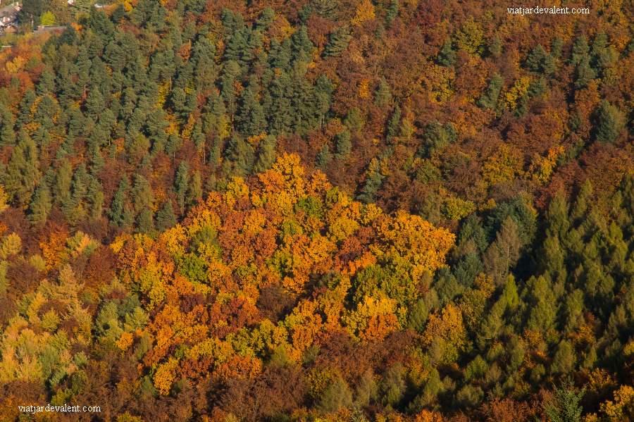 La tardor al Pfalz